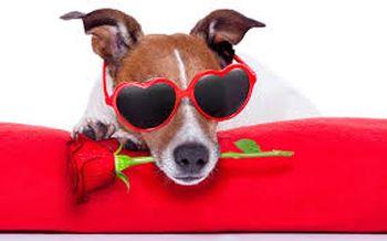 Valentines Day 2018. Nymåne. Solformørkelse. Og noget med en brun hund.