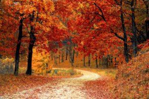 Sidste udkald for efterårs-vejrudsigter!